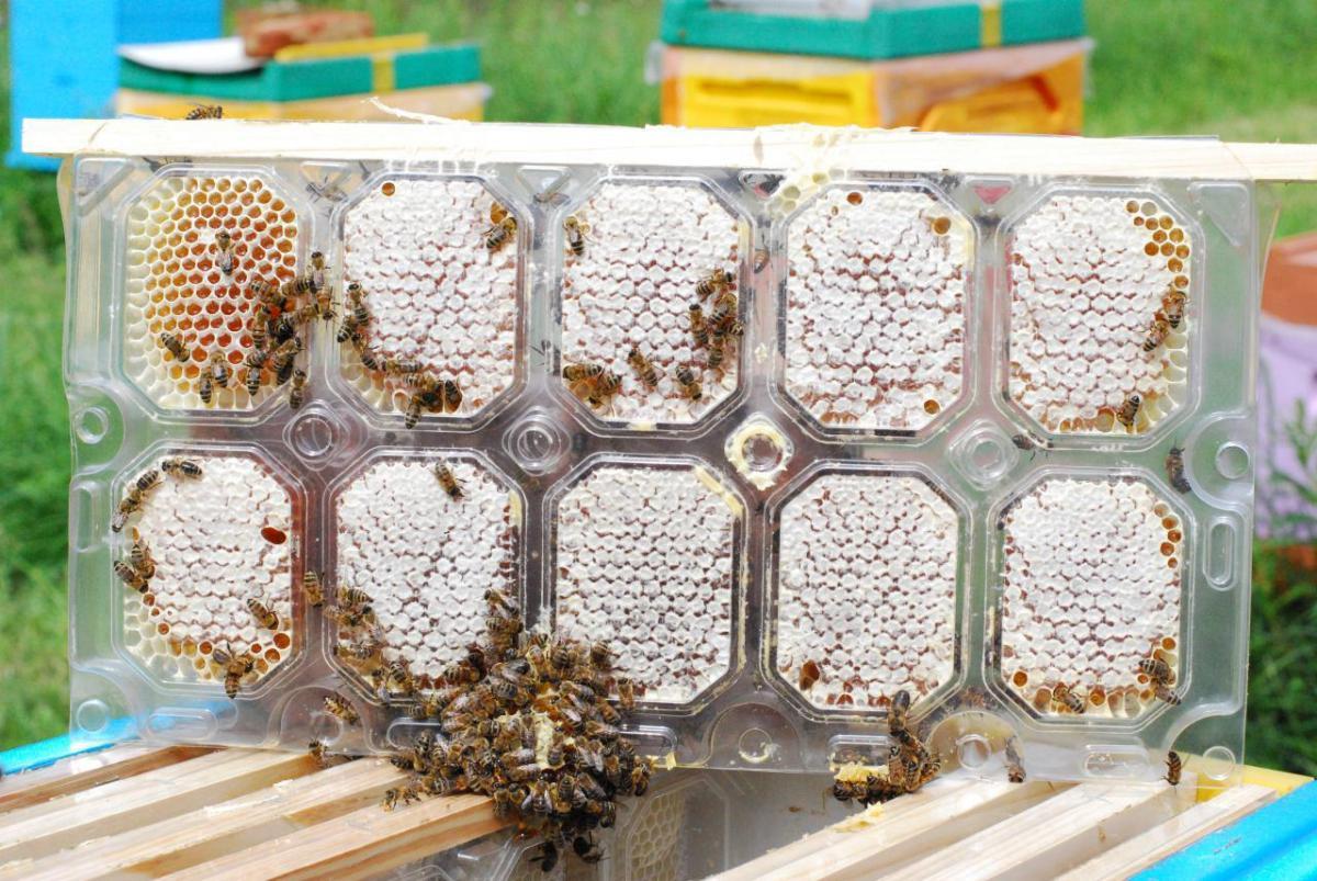 Как делают мед в сотах